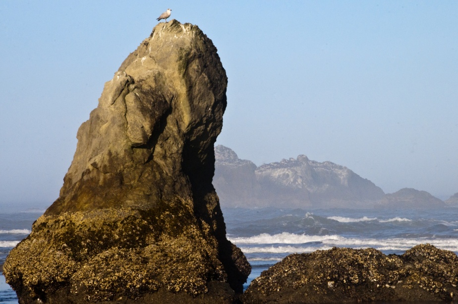 large-rock-at-the-beach